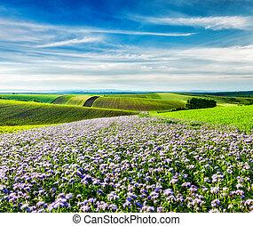 Rolling fields of Moravia, Czech Republic with purple...