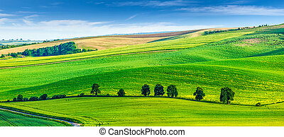 Rolling landscape of South Moravia with trees. - Panorama of...