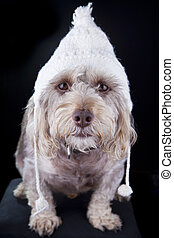 winter hat on dog