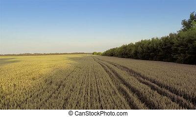 Flying over fields   - Aerial shot: Flying over fields
