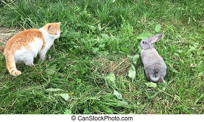Cat and rabbit - Grey small rabbit and red cat on the meadow