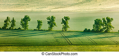 Moravian rolling landscape with trees in early morning...