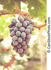 grapes with retro filter effect