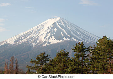 Mount Fuji and green pine trees in the park