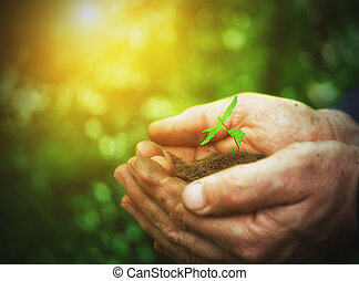 young sprout plants in old dirty hands, concept on green...