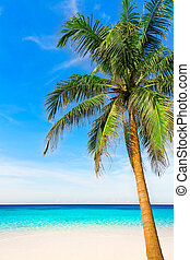 Palm tree in tropical perfect beach at Phuket.