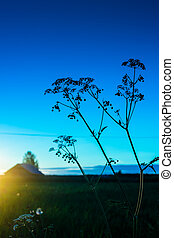 Cow Parsley Silhouette - A beautiful but very typical view...