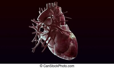 human heart rotate on black background - high quality 3d...
