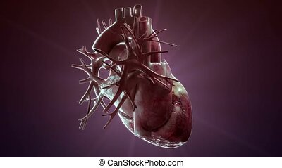 human heart rotate on purple background - high quality 3d...