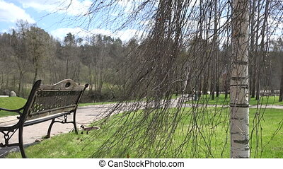 park path bench tree - bench under birch tree without leaves...