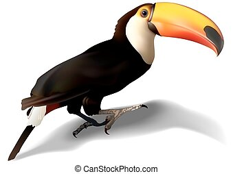 Toucan Bird - Toucan Ramphastos toco - Detailed...
