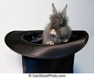 Rabbit bunny in top hat - Image of a velvet brown bunny in a...