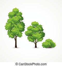 Illustration of a set of different trees. Vector illustration