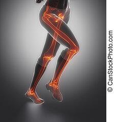 enfocado, en, pierna, huesos, anatomía,