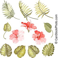 Hibiscus single tropical flower - Set of hibiscus tropical...