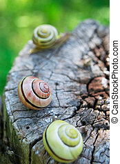 Snails on wood