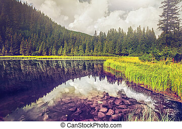 Summer mountain lake forrest - Summer mountain lake...