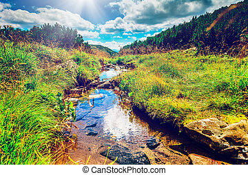 Mountain stream in the morning - Alpine stream on summer...