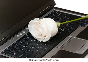White rose on the black laptop keyboard