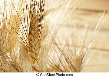 golden wheat cereal, still life - golden wheat cereal over...