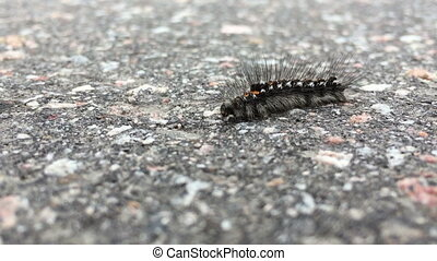 caterpillar macro - caterpillar crawling on the asphalt...