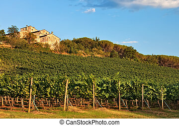 Tuscan house on hill with vineyard, Chianti, Italy.
