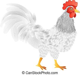 Cartoon Rooster - Abstract cartoon rooster illustration on...