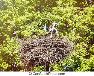 White stork in the nest - White stork Ciconia ciconia is a...