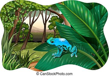 Blue frog sitting on a huge leave in a jungle