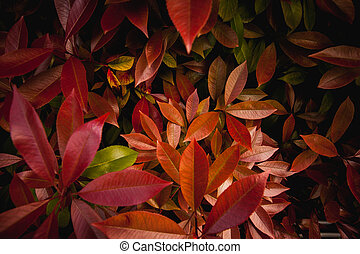 red and orange leaves background