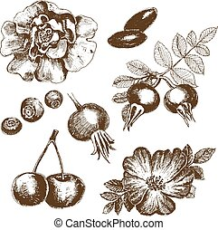 Berries collection. Set of hand drawn graphic illustrations.