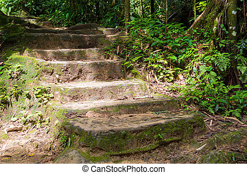 stone stairscase in forest, stairs