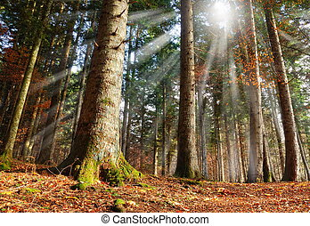 sun beam in the wood - forest illuminated by sun beam