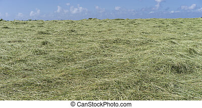 Newly Mown Hay Field on a Bright Sunny Day