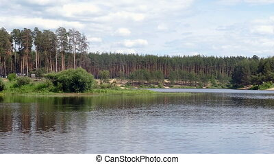 Pond Forest in the summer in Russia