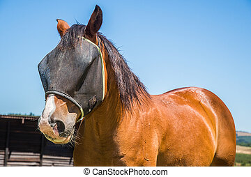 Horse with fly net - Portrait of a brown horse with a black...