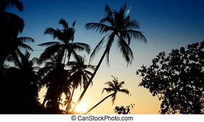 Beach with palms