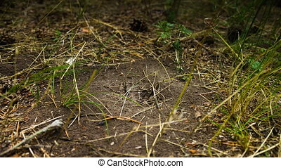 Ants crawling on the anthill - Many ants moving around in...