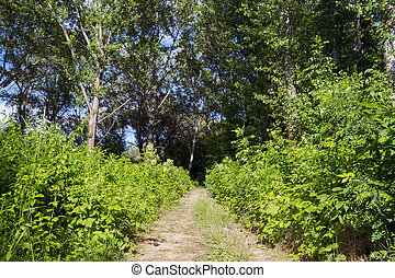 Floodplain forest path - Forest path along the Maros River,...