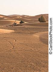 el, viejo, bien, en, sáhara, desierto, para, Agua...