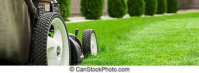 Lawn mower on green lawn.