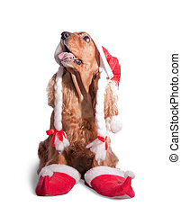 Santa spaniel - english cocker spaniel wearing a santa hat