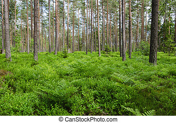 Green ground in a bright forest - Green ground with fern and...