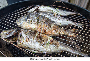 BBQ Dorade - Dorade fishes on the barbecue