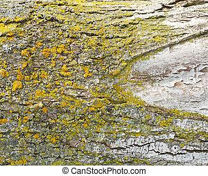 Tree fungus or rust on bark of tree trunk