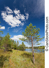 Small pine tree near lake