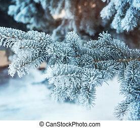 árvore, Inverno, fundo