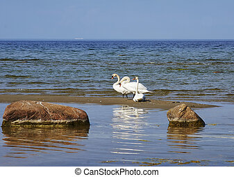 Three swans at the seaside - Three swans sitting at the sand...