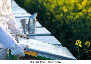 Apiarist checking the hive - The apiarist checking the hive...