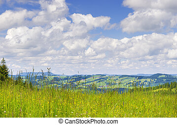 Meadow to Allgaeu - Meadow on the mountain Alpspitz near...
